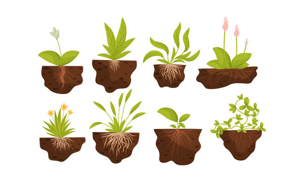 Green Plants and Flowers Growing with Their Roots in Soil Vector Set