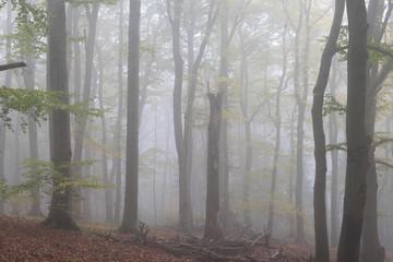 Keuken foto achterwand Bos in mist Buchenwald im Nebel im Teutoburger Wald