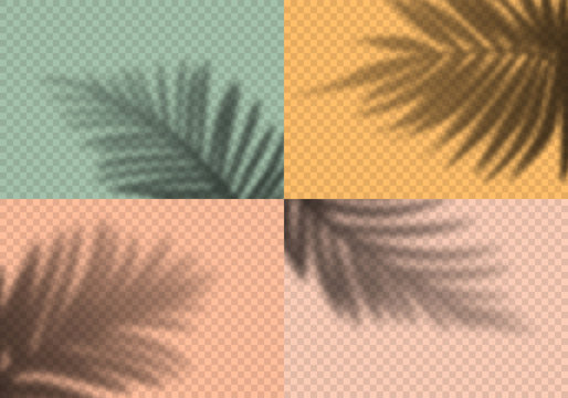 Vector Set of Transparent Shadows of Palm Leaves. Decorative Design Elements for Collages. Creative Overlay Effect