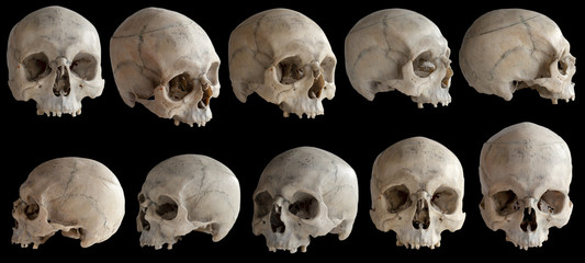 A human skull without a jaw. Isolated on black background. Wall mural
