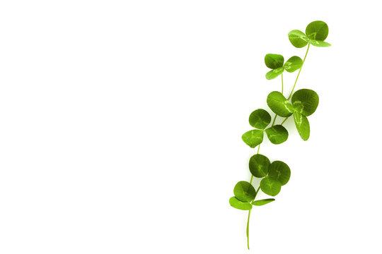Spring floral background. Clover leaf symbol. Holiday background. Saint patrick day