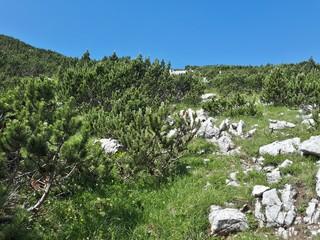 Spoed Foto op Canvas Olijf mountain landscape with trees