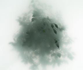 Wall Mural - tree in fog
