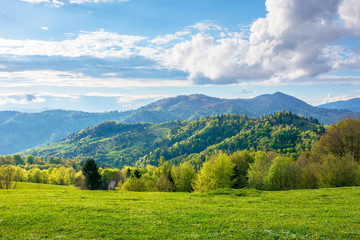 gorgeous rural landscape in mountains. fields and meadows on hills rolling in to the distant ridge. trees in fresh green foliage. nature scenery on a sunny day in spring. fluffy clouds on the sky