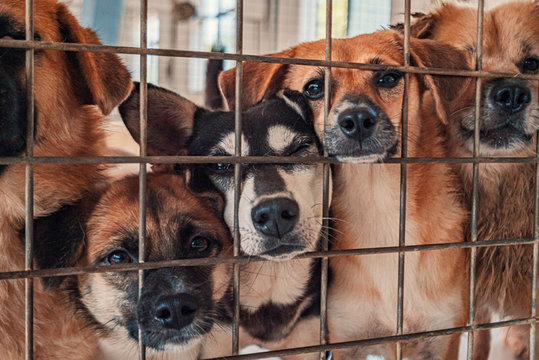 Unwanted and homeless dogs of different breeds in animal shelter. Looking and waiting for people to come adopt. Shelter for animals concept