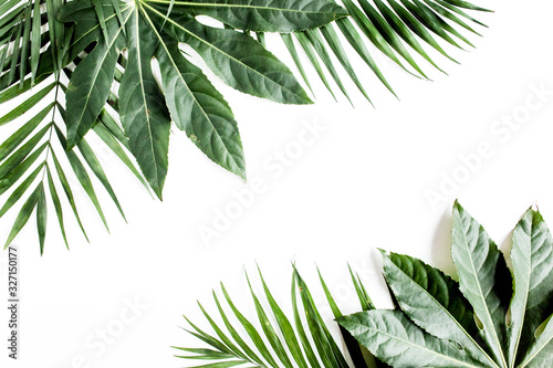 Wall mural Tropical palm leaves Aralia isolated on white background. Tropical nature concept.