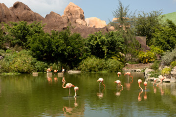 Fotobehang Flamingo Flock of pink beautiful flamingo standing in pond with reflection.