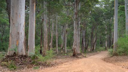 Wall Mural - Mount Frankland National Park, Western Australia