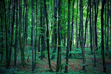 Trunks of trees on autumn forest floor