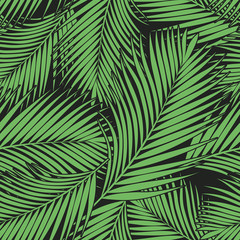 Fotorolgordijn Tropische Bladeren Green tropical palm leaves texture on dark backdrop