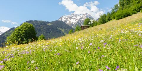 Wall Mural - Panorama einer Bergblumenwiese im Frühjahr im Zillertal