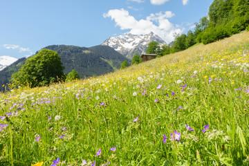 Fototapete - Bergblumenwiese im Frühling im Zillertal
