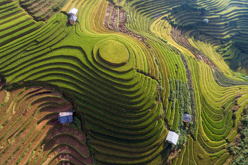 Acrylic Prints Rice fields Beautiful step of rice terrace paddle field in sunset and dawn at Mam Xoi hill, Mu Cang Chai, Vietnam. Mu Cang Chai is beautiful in nature place in Vietnam, Southeast Asia. Travel concept. Aerial view