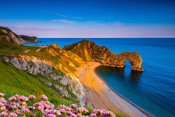 Jurassic coast thrift and Durdle Door in Dorset at sunset Fotomurales