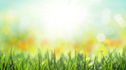 Wall Mural - grass with sunny meadow bokeh background, spring blossom