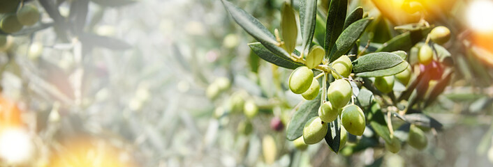 Nature background with olives