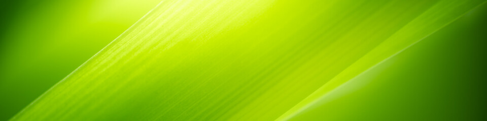 Keuken foto achterwand Lime groen Beautiful nature view of green leaf on blurred greenery background in garden and sunlight with copy space using as background natural green plants landscape, ecology, fresh wallpaper concept.