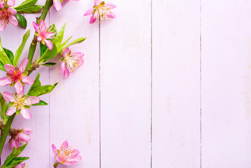 Branch of Almond with pink flowers on a light pink shabby wooden board. Top view.