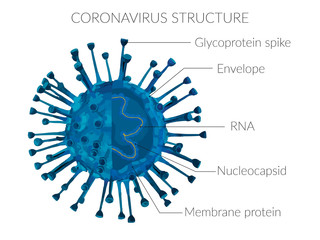 Coronavirus structure molecular protein membrane epidemic virus Fotomurales