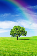 Fototapete - Idyllic view, lonely tree with rainbow on green field