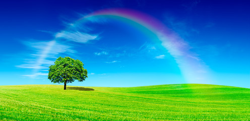 Fototapete - Idyll, panoramic view, lonely tree with rainbow on green field