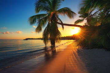 Zelfklevend Fotobehang Ochtendgloren Palm trees on a tropical island beach, sunrise shot