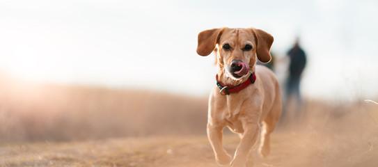 Tuinposter Hond Small Yellow Dog Running Through Field