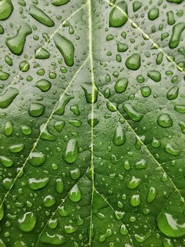 Close-up of a water droplets on a leaf