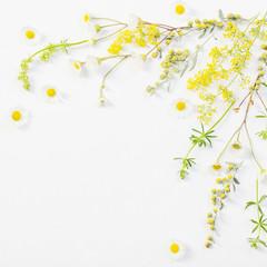 Foto auf Acrylglas Blumen wildflowers on white paper background
