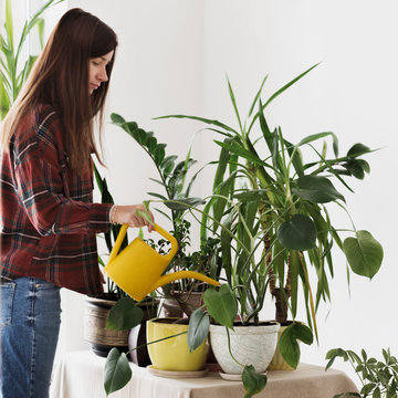 Woman at home watering plants Houseplants at home