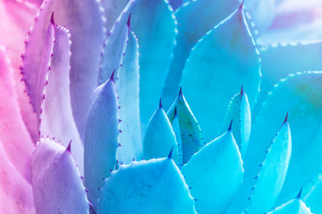 Sharp pointed agave plant leaves Wall mural