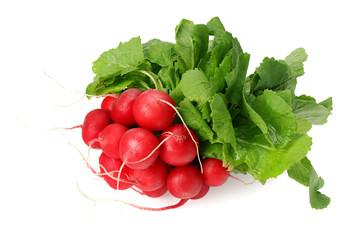 Fototapeta fresh radish bunch isolated on white background obraz