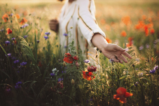 Woman in rustic dress gathering  poppy and wildflowers in sunset light, walking in summer meadow. Atmospheric authentic moment. Copy space. Hand picking up flowers in countryside. Rural slow life