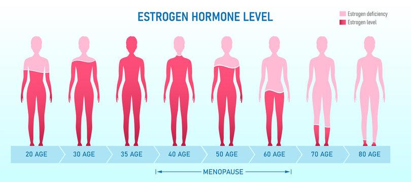 Creative vector illustration of estrogen hormone level, menopause chart infographic background. Female sex hormone template. Abstract concept estrogen level, representative testosterone charts