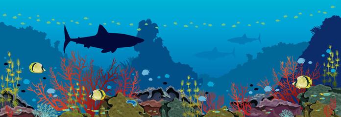 Underwater sea - Corals, sharks, fishes