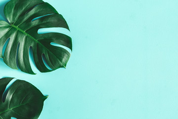 Summer composition. Monstera leaves on blue background. Summer concept. Flat lay, top view, copy space