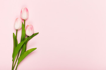 Foto op Canvas Tulp Copy-space blooming tulips on pink background