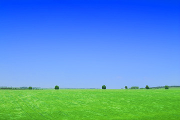 Wall Mural - Idyll, view of green field and the blue sky