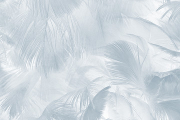 Beautiful white baby blue colors tone feather pattern texture cool background for decorative design wallpaper and other Fotomurales