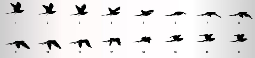 Bird flying animation sequence silhouette, loop animation sprite sheet Fotomurales