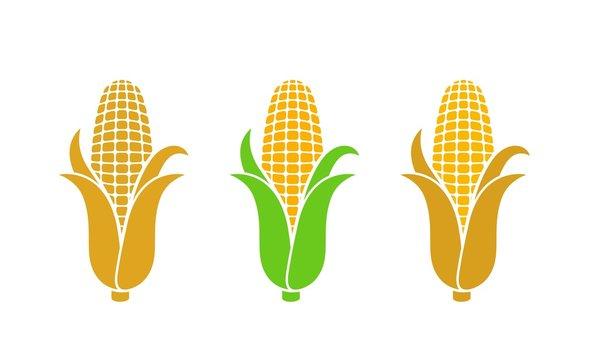 Corn logo. Isolated corn on white background