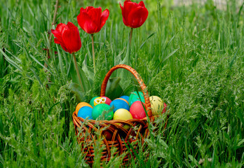 Fotobehang Colored eggs and tulips front view, Copy space, place for text. Multi-colored Easter eggs lie in a wicker rattan basket, which stands in tall green grass under growing tulips.