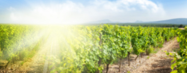 Photo sur Toile Vignoble Blurred backdrop with sunny landscape of vineyard