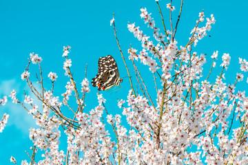 Foto op Aluminium Vlinder Closeup beautiful butterfly in a summer garden