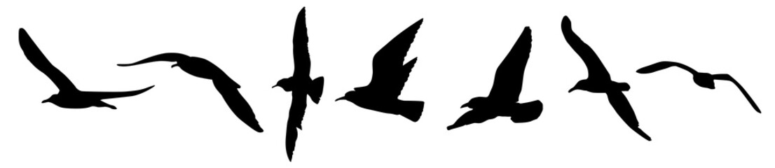 A seagulls silhouette