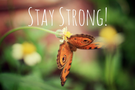 Inspirational quote - Stay strong. With a beautiful orange butterfly hanging on small grass flower with fragile stem as illustration. Encouragement motivational words with nature.