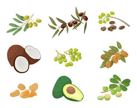 Hair oils, plants and nuts, oily seeds, icons vector. Skin care and hairs health, organic cosmetics, castor and macadamia. Olive and coconut, avocado and grapeseed, almond and amla illustration