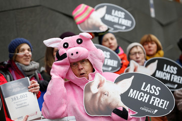 Foodwatch and Campact call for protests against the use of gestation crates in pig farming in Berlin
