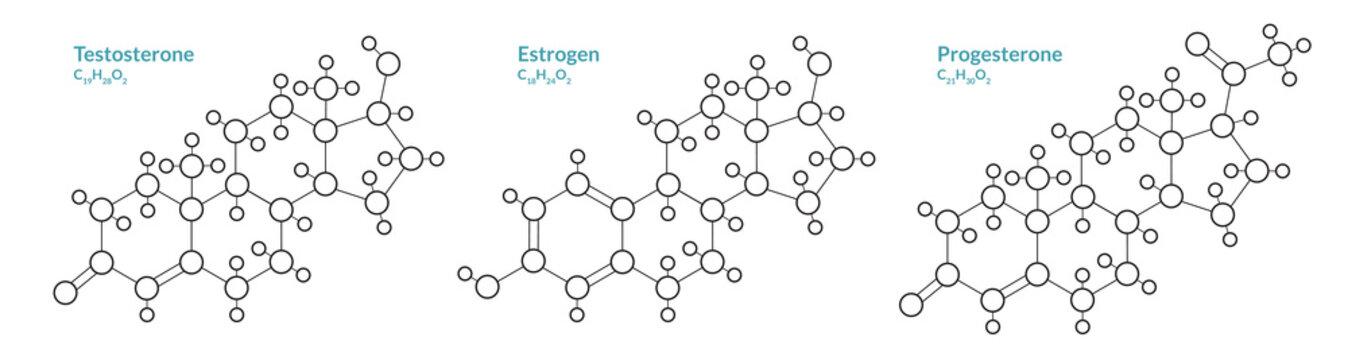 Testosterone, Estrogen, Progesterone. Male and Female Sex Hormones. Structural Chemical Formula and Molecule Model. Line Design. Vector Illustration
