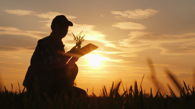 A woman farmer studying the seedlings of a plant in a field, using a tablet